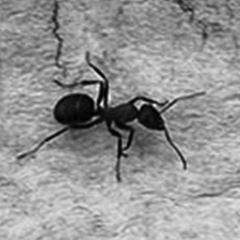 Las Hormigas de Nandayure